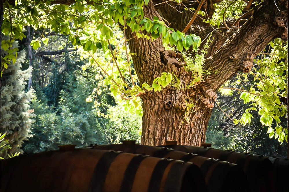 Marlene Kuhn-Osius | Photographe Viticulture Vigne | Cash Vin